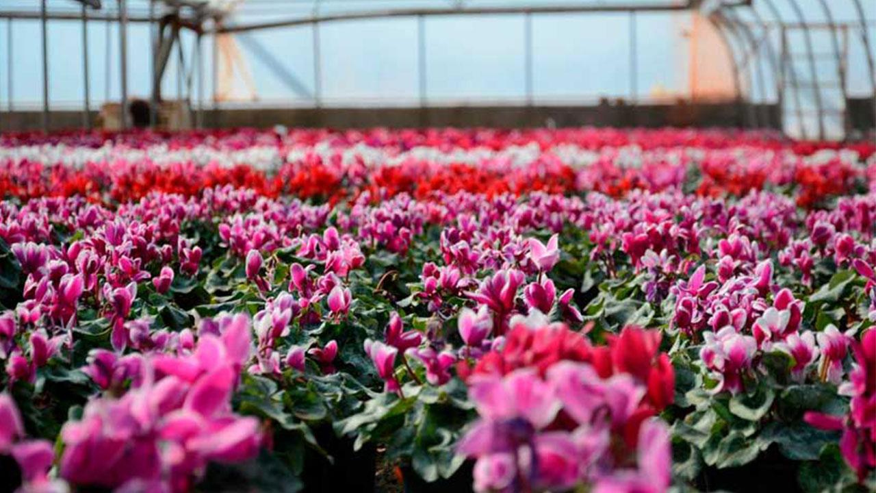 Flowermarkazi