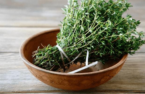 unique properties of various plant