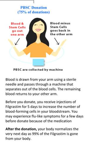 Peripheral blood stem cell
